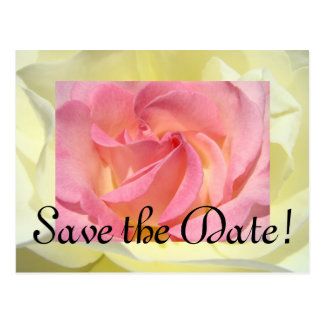 Save the Date! postcards White Rose Pink Rose Love