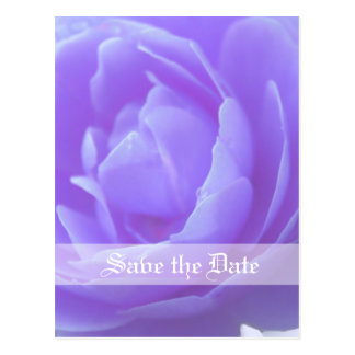 Save the date,purple rose flower postcard