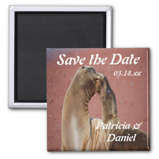 Save The Date Sea Lions 2 Inch Square Magnet