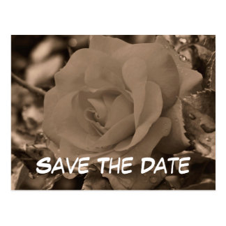 Save The Date Sepia Rose Flower Photo Postcard