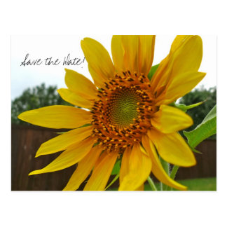 Save the Date Sunflower postcard