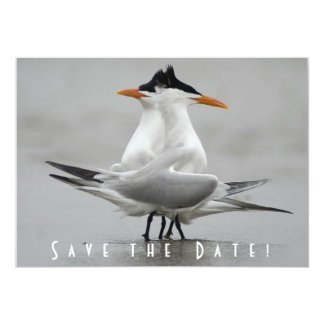 Save the Date Terns Card