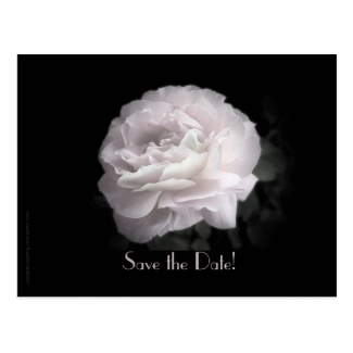 Save the Date Vow Renewal Ceremony Pale Pink Rose