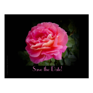 Save the Date Vow Renewal Ceremony Pink Rose Postcard