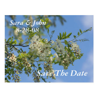 Save The Date Wedding Locust Blossoms Postcard