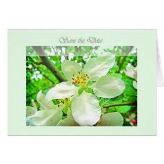 Save the date - White cherry blossoms Card