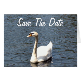 Save The Date white swan Card