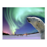 Save the Endangered Polar Bears for Christmas Postcard