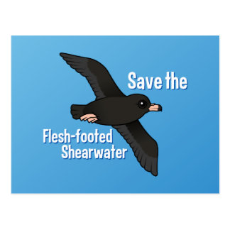 Save the Flesh-footed Shearwater Postcard