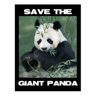 Save the Giant Panda Postcard