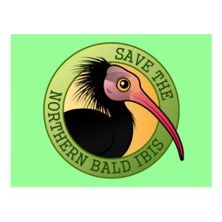 Save the Northern Bald Ibis Postcard