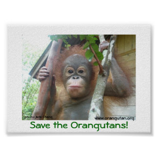 Save the Orangutans Poster