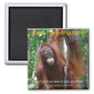 Save the Orangutans with Krista Magnet