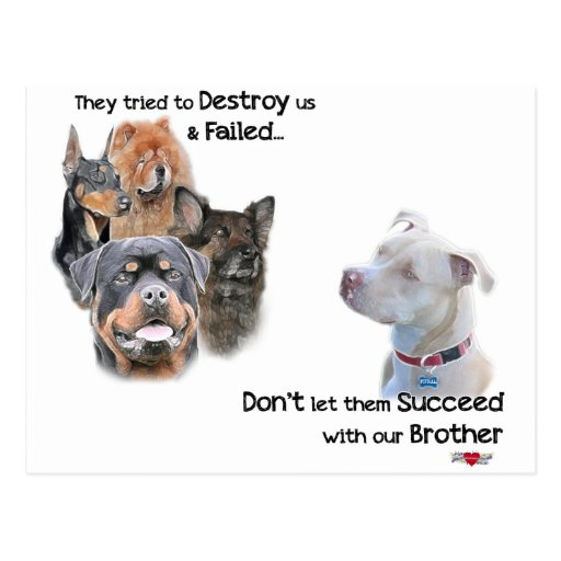 Save the Pitbull Post Cards