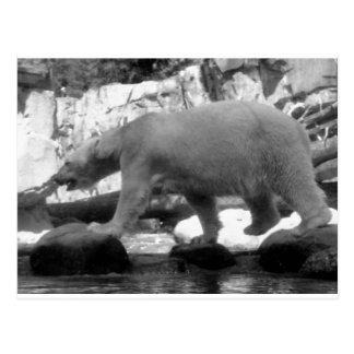 SAVE THE POLAR BEARS POST CARDS