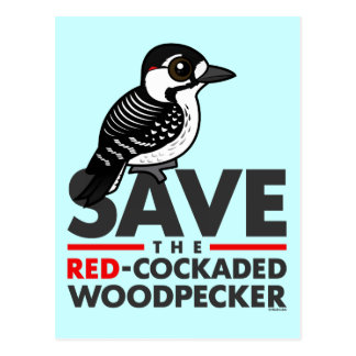 Save the Red-cockaded Woodpecker Postcard