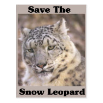 Save the Snow Leopard Postcard