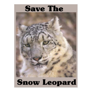 Save the Snow Leopard Post Card