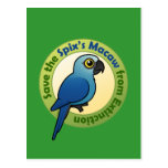 Save the Spix's Macaw from Extinction Post Cards