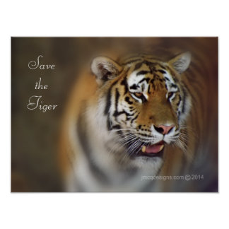 Save the Tiger Amur Siberian Tiger Poster