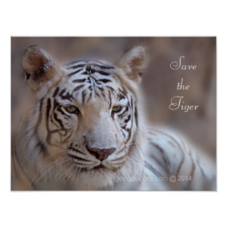 Save the Tiger White Bengal Tiger Poster