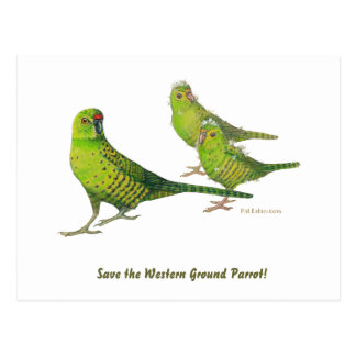 Save the Western Ground Parrot! Postcards