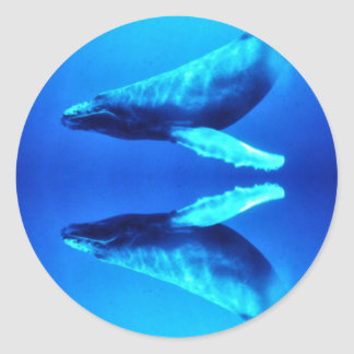Save the Whales Classic Round Sticker