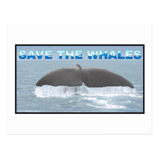 Save the Whales Post Card