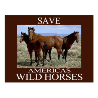 Save the Wild Horses Postcard