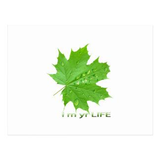 save water-i m yr life postcard
