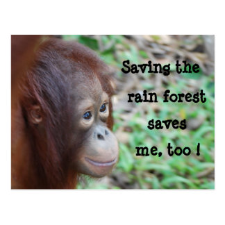 Save Wildlife and Rainforest postcard
