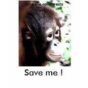Save Wildlife T-shirt shirt
