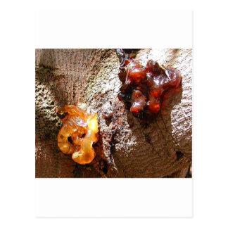 Savia del ámbar de los árboles tarjeta postal