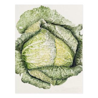 Savoy Cabbage Postcard