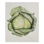 Savoy Cabbage Poster