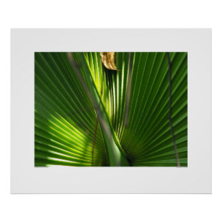 Saw Palmetto Photo Closeup Poster