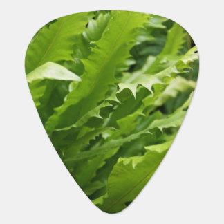 Saw Tooth Kelp Fern Guitar Pick