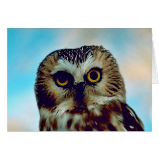 Saw-whet owl card