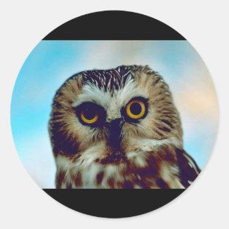 Saw-whet owl classic round sticker