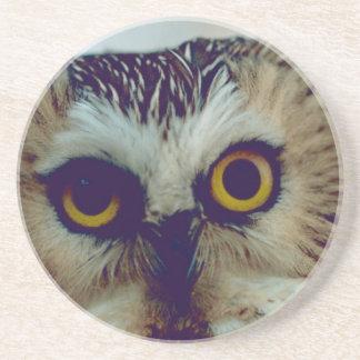 Saw-whet owl drink coaster
