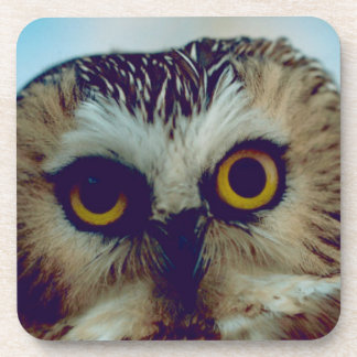 Saw-whet owl drink coaster
