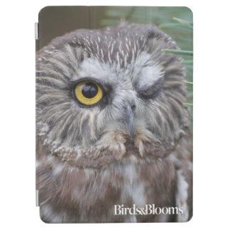 Saw-whet Owl iPad Air Cover