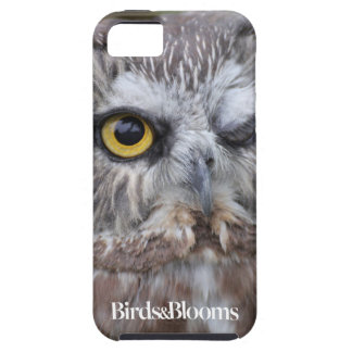 Saw-whet Owl iPhone SE/5/5s Case