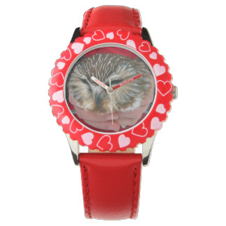 Saw-whet Owl Kids Watch