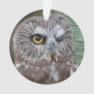 Saw-whet Owl Ornament