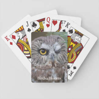 Saw-whet Owl Playing Cards