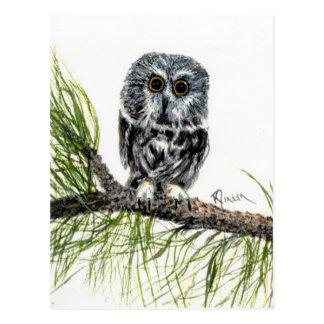 Saw Whet Owl Postcard