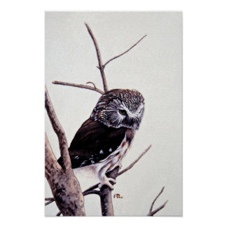 Saw-whet owl posters