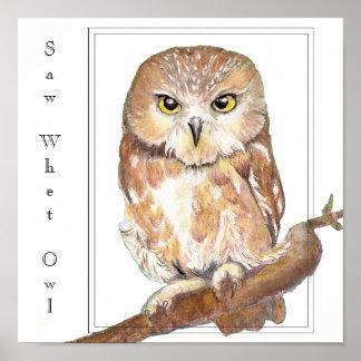 Saw Whet Owl Print