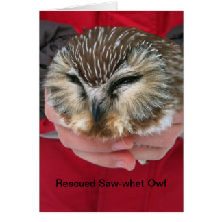 Saw-whet Owl Quote Greeting Card